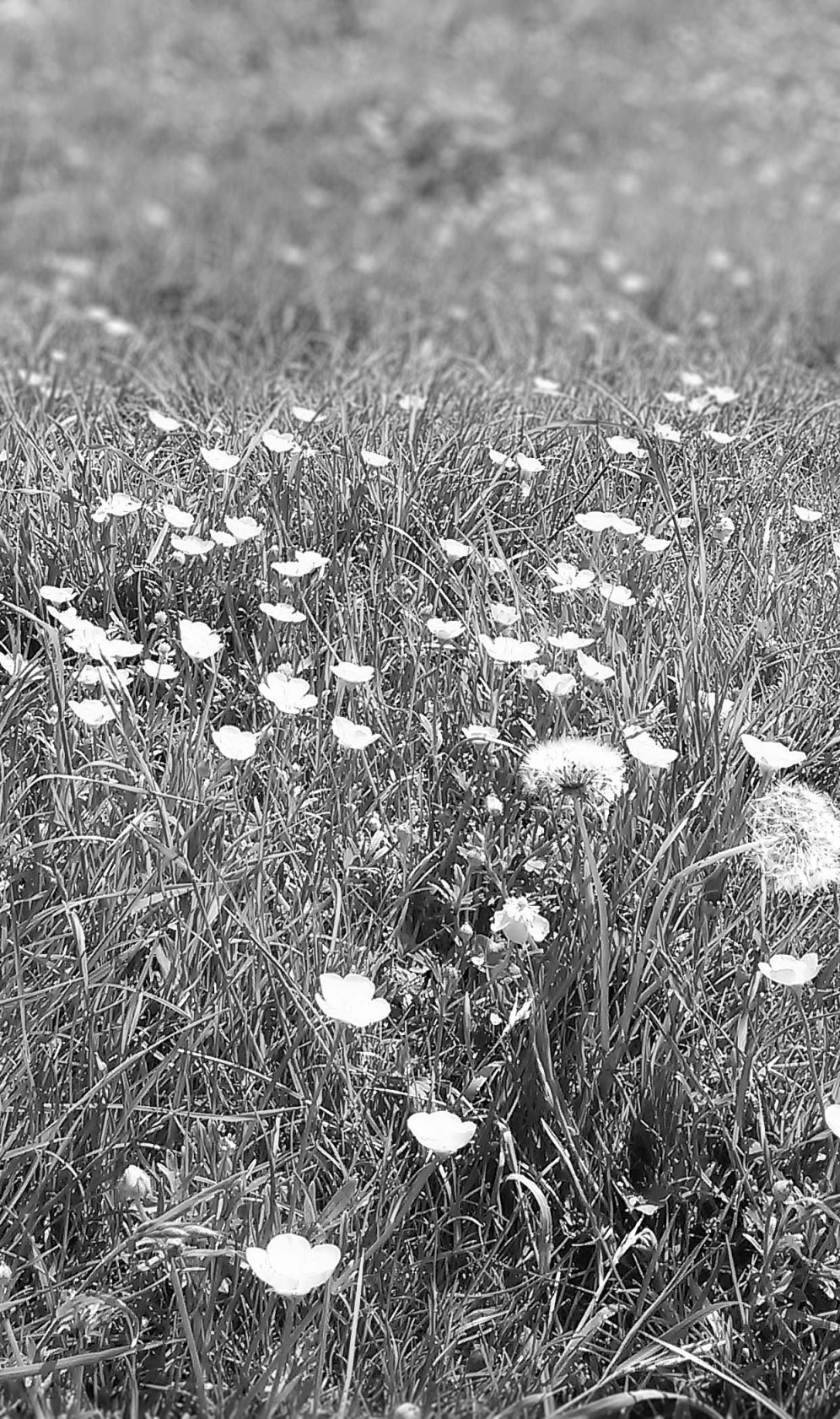 grassblur