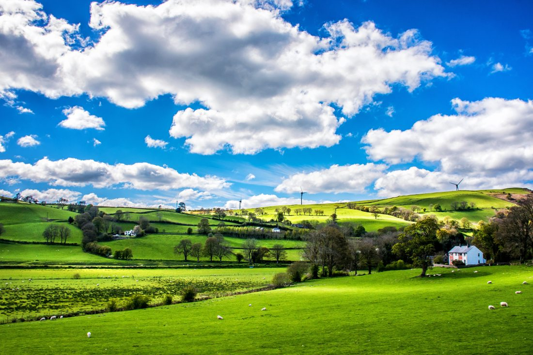 animals-clouds-country-1662145