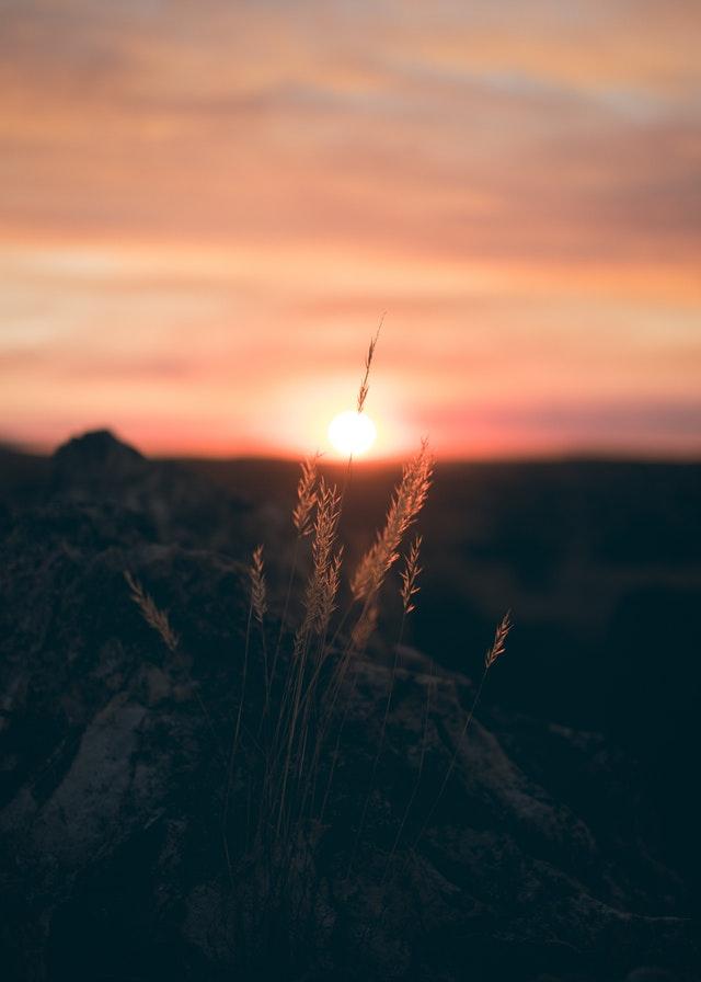 backlit-dawn-nature-1008737