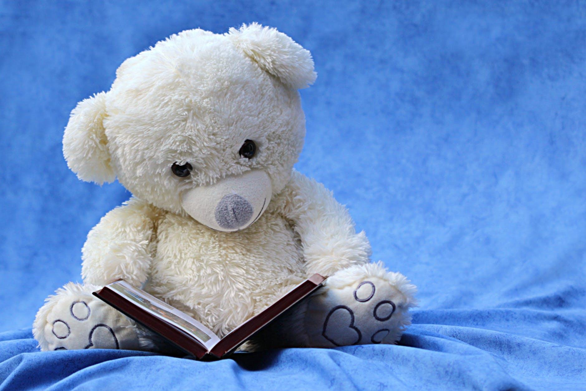 white teddy bear reading book