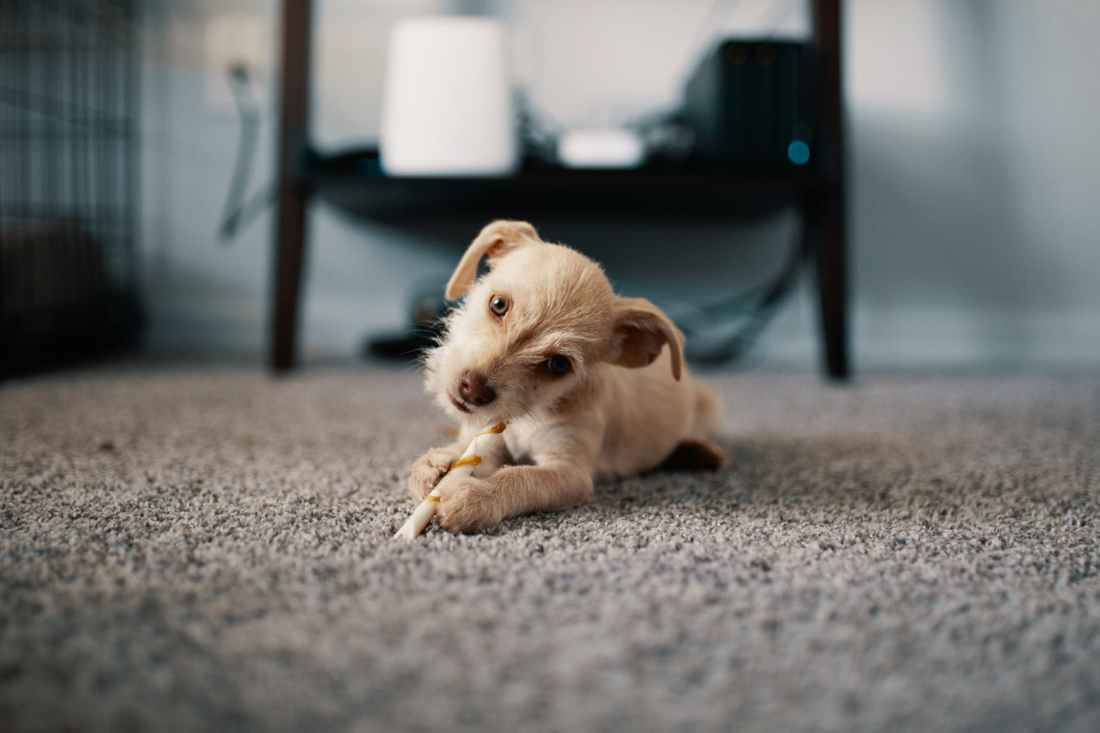 photo of puppy lying on carpet