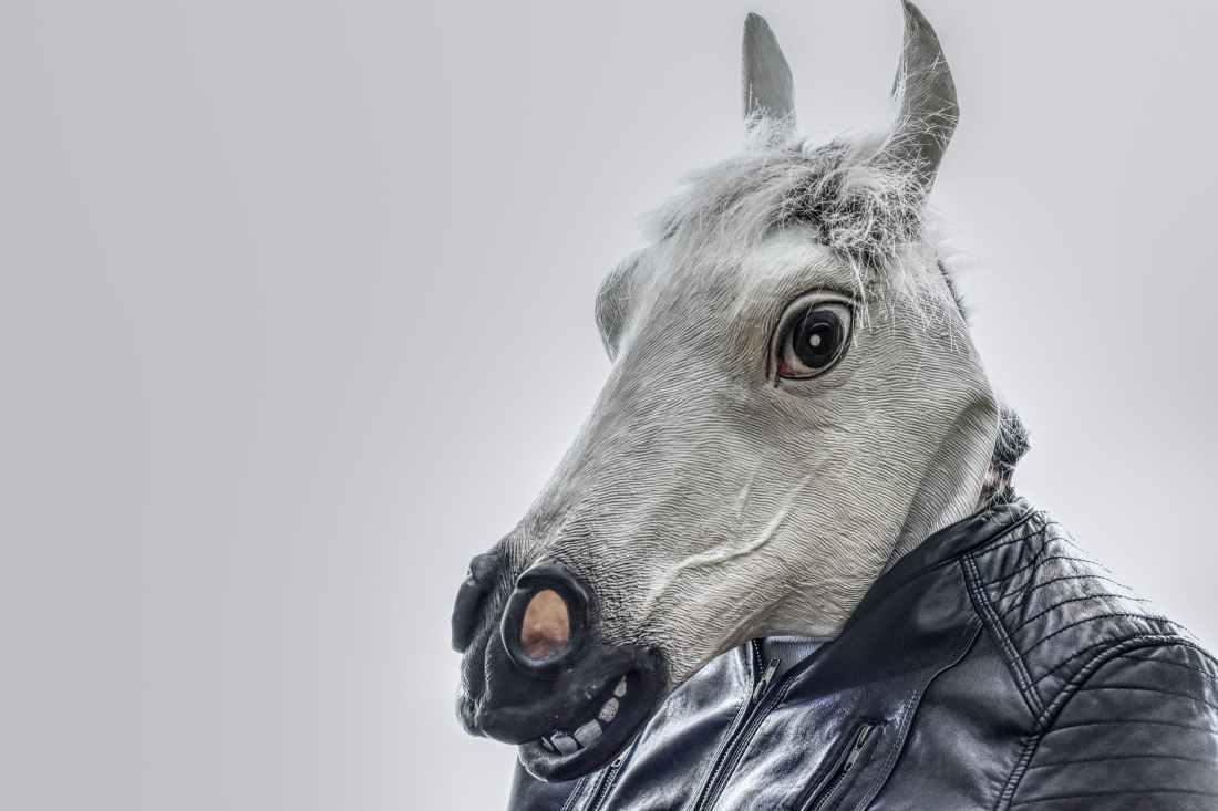 white horse wearing black leather zip up jacket