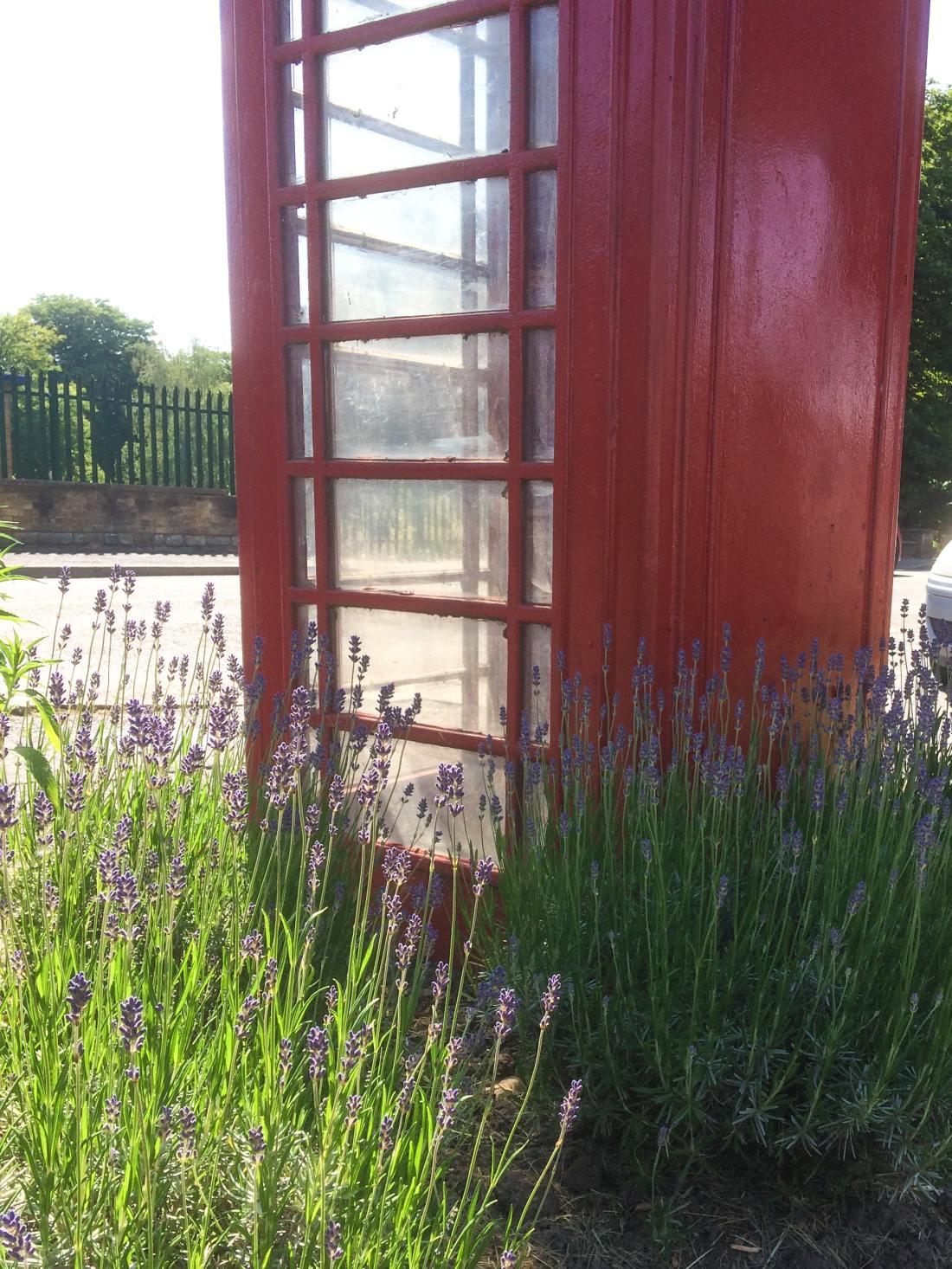 red-telephone-lavender-flower-4526099