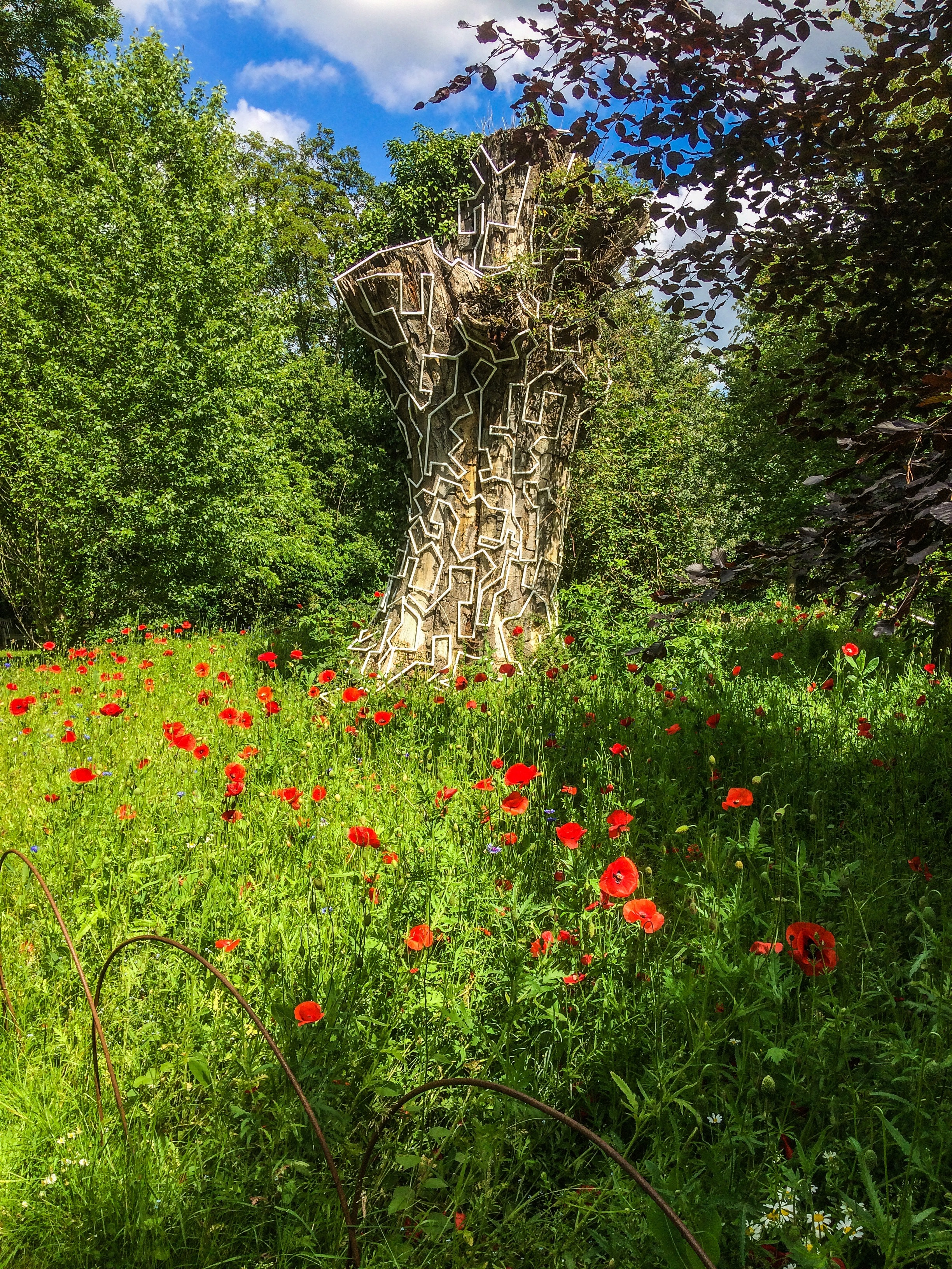 wild-poppies-gardens-poppies-3610631